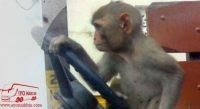 Monyet Aja Mau Kasi Kursi Bus
