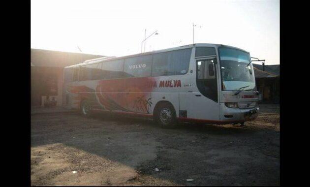 Bus volvo Sedya Mulya